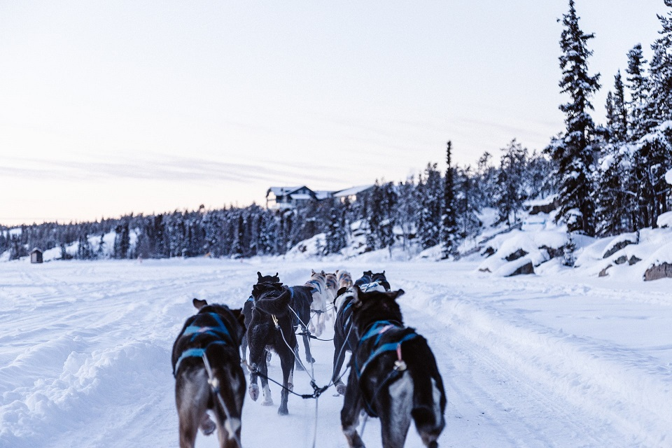 Iditarod kutyaszán verseny Alaszka