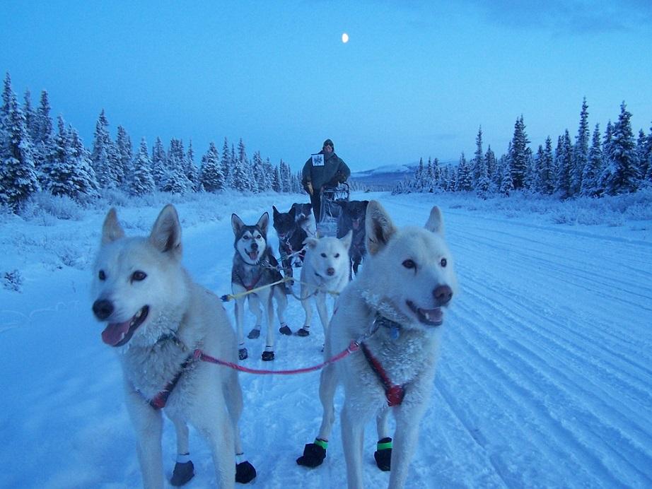 Iditarod kutyaszán verseny Alaszkában