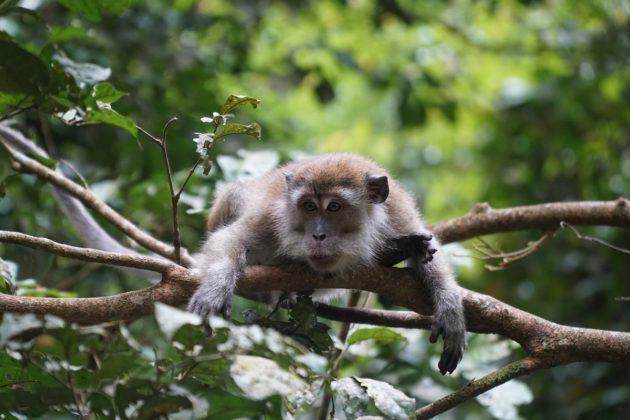 szumátrai dzsungel élővilág