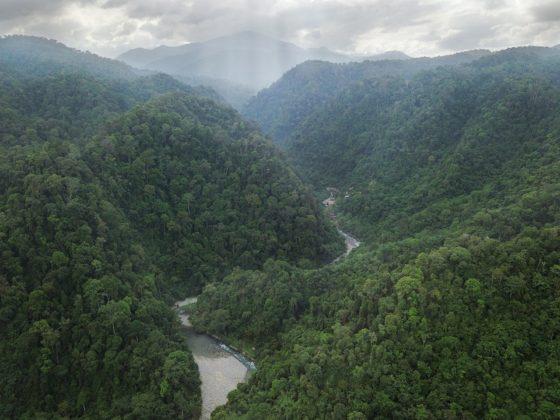 szumátrai dzsungel