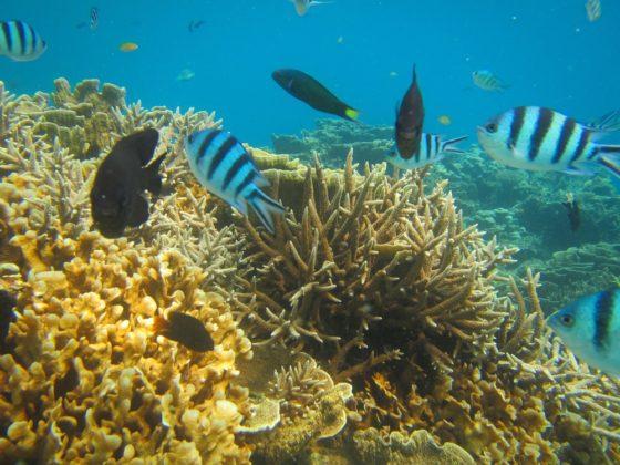 korall Karimunjawán