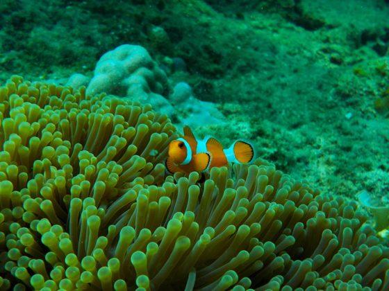 korall és hal Karimunjawa szigeten Indonéziában