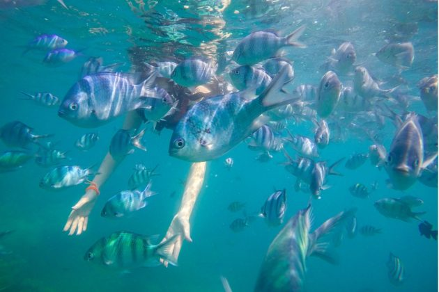 halak között úszva Indonéziában