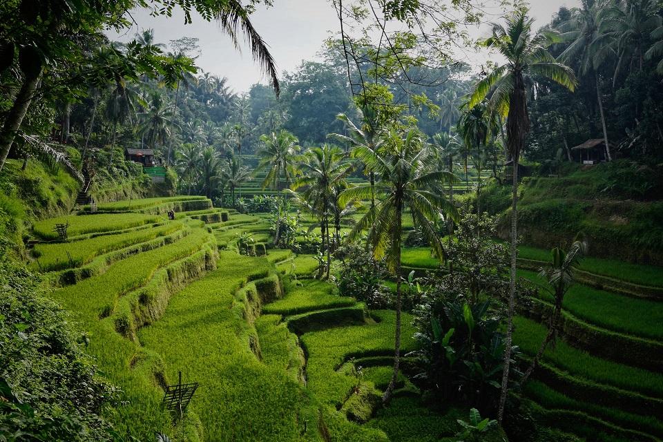 Kábítószer törvények Indonéziában
