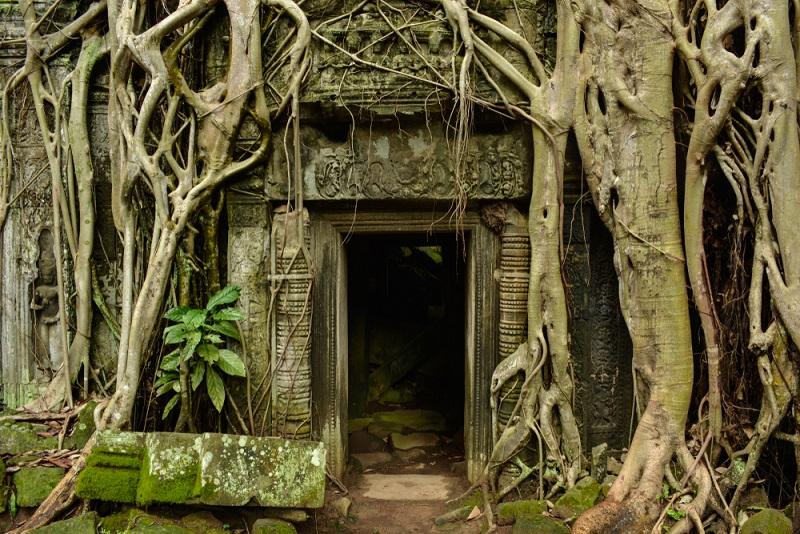Angkor Wat fákkal indákkal benőtt templomai