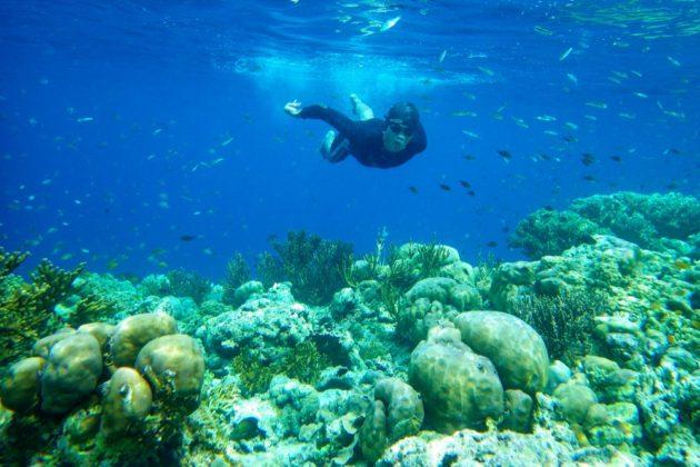 Menjangan Bali sznorkelezés korallok és szarvasok