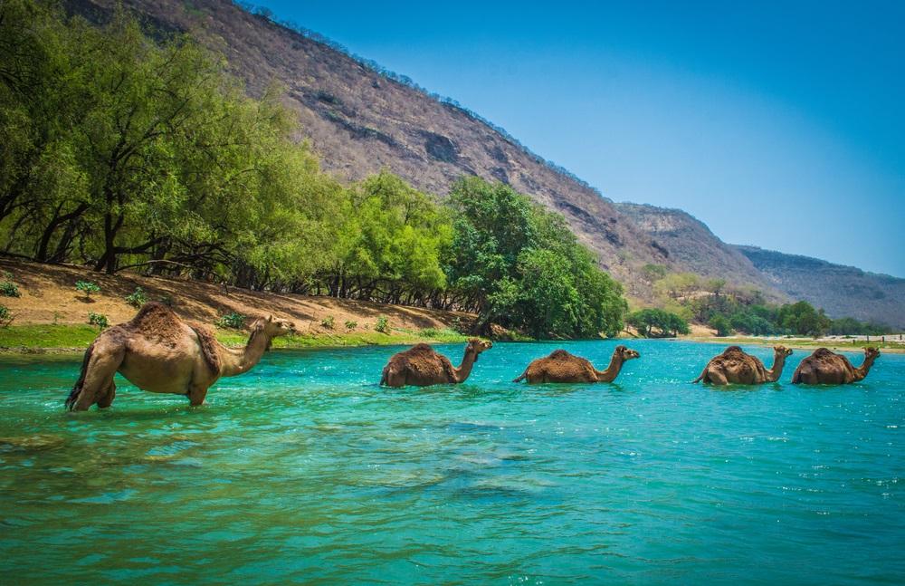 Omán déli zöld területek