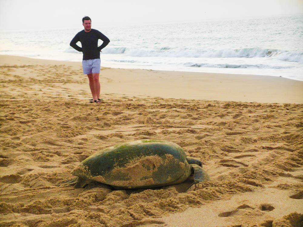 omán teknős rezervátum Ras al-Jinz